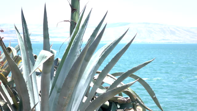 Succulent Sea of Galilee and Golan Heights in Distance video