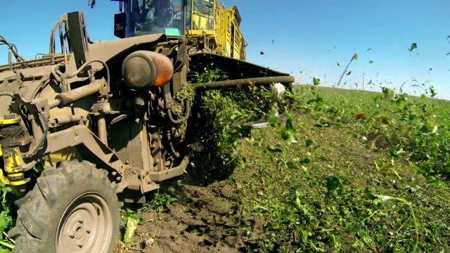 Sugar Beet Harvester in Action video