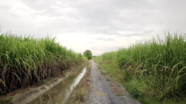 sugar cane farm way in country sugar cane farm way in country/Asia,Thailand sugar cane stock videos & royalty-free footage