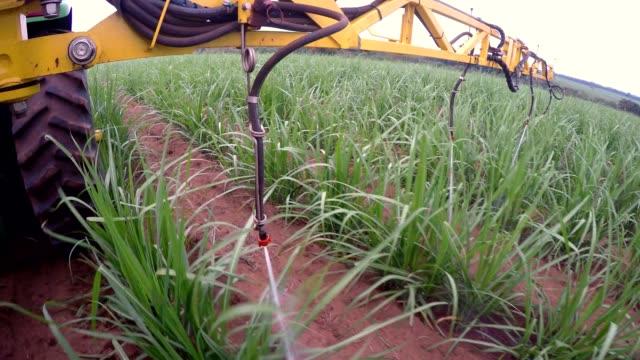 sugar cane fertilizing tractor - canna da zucchero video stock e b–roll