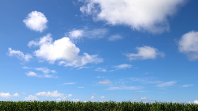 Sugar cane field and flowing clouds