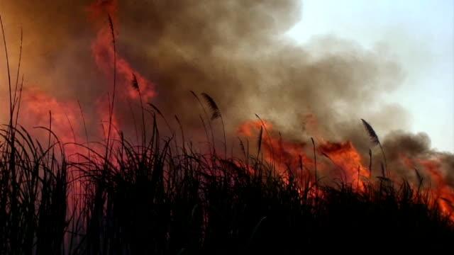 Sugar cane Fire Fire burns furiously sugar cane stock videos & royalty-free footage