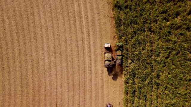 Sugar cane harvest in sunny day in Brazil. Aerial view Sugar cane harvest in sunny day in Brazil. Aerial view. biomass renewable energy source stock videos & royalty-free footage