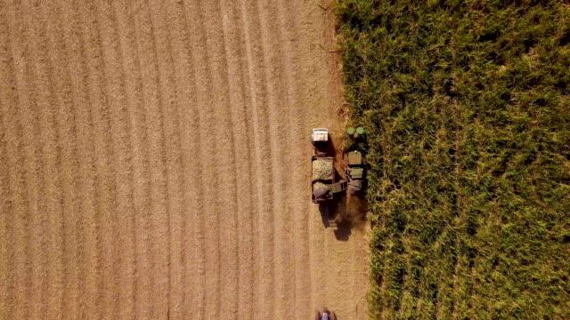 sugar cane harvest in sunny day in brazil. aerial view - биомасса возобновляемая энергия стоковые видео и кадры b-roll