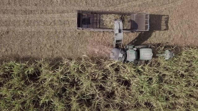 Sugar cane harvest machinery plantation. Aerial view Sugar cane harvest machinery plantation aerial sugar cane stock videos & royalty-free footage