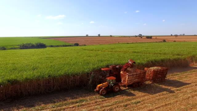 hasvest zuckerrohrplantage antenne - zucker stock-videos und b-roll-filmmaterial