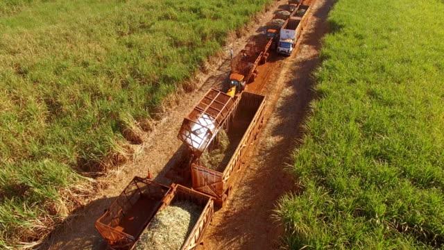 Sugar cane hasvest plantation aerial Sugar cane hasvest plantation aerial sugar cane stock videos & royalty-free footage