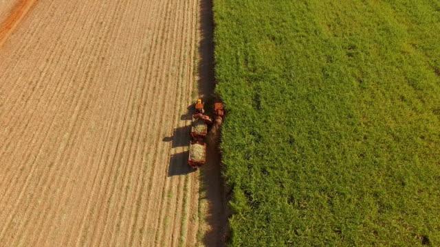 sugar cane hasvest plantation aerial - canna da zucchero video stock e b–roll