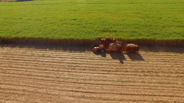 vídeos de stock, filmes e b-roll de plantação de cana de açúcar hasvest aérea - plantação