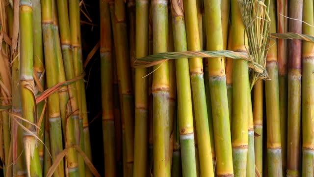 sugar cane juice. bunch of sugar cane stalks - canna da zucchero video stock e b–roll