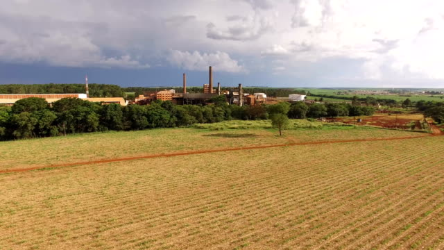 sugar cane plantation industry in back video
