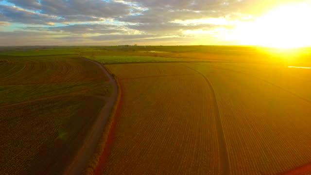 zuckerrohrplantage - zucker stock-videos und b-roll-filmmaterial