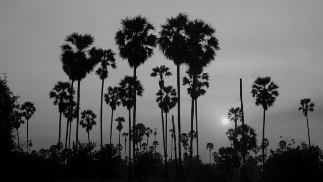 socker plam tree på solnedgång, svart och vit ton - abstract silhouette art bildbanksvideor och videomaterial från bakom kulisserna