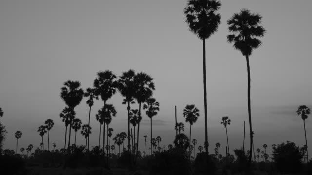 socker fläck träd på solnedgången, zooma rörelse - abstract silhouette art bildbanksvideor och videomaterial från bakom kulisserna