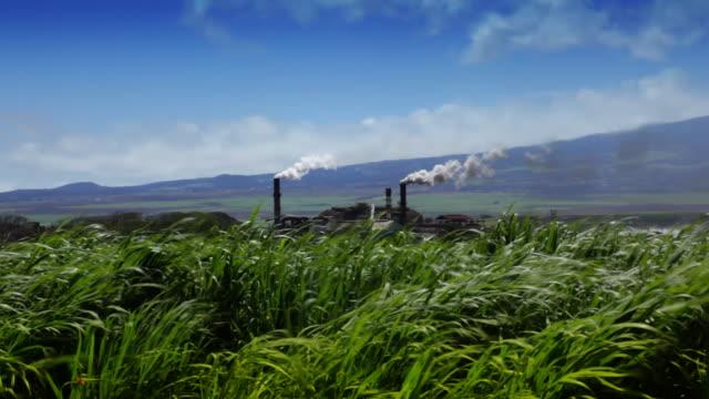 Sugarcane Field and Refinery (Hawaii) video
