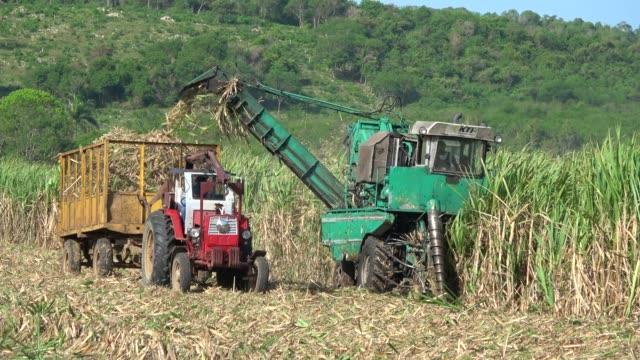 sugarcane harvest on the field with a combine harvester in santa clara cuba- serie cuba reportage - canna da zucchero video stock e b–roll