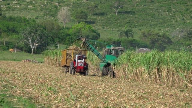 sugarcane harvest on the field with a combine harvester in santa clara cuba- serie cuba reportage - сахарный тростник стоковые видео и кадры b-roll