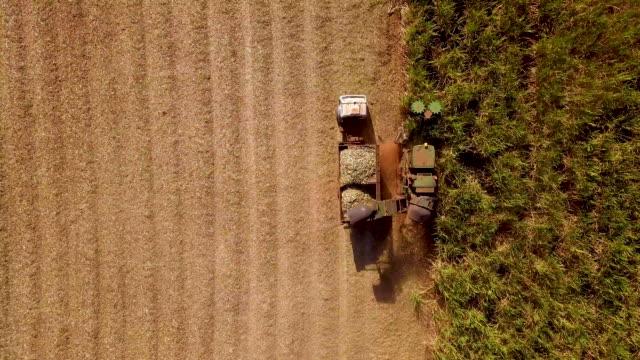 sugarcane hasvest plantation - биомасса возобновляемая энергия стоковые видео и кадры b-roll