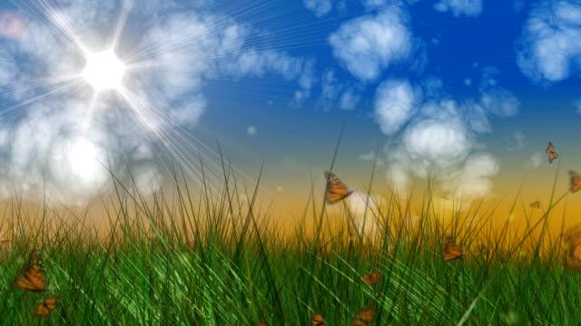 sfondo di estate con nuvole, loop farfalle e erba - farfalla ramo video stock e b–roll