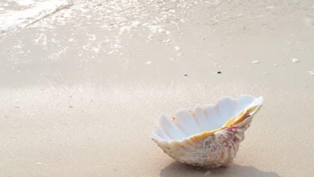 Summer beach - shell on sandy beach