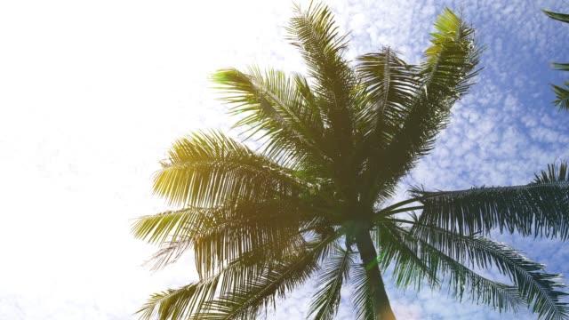 summer beach with coconut palm trees - palm tree filmów i materiałów b-roll