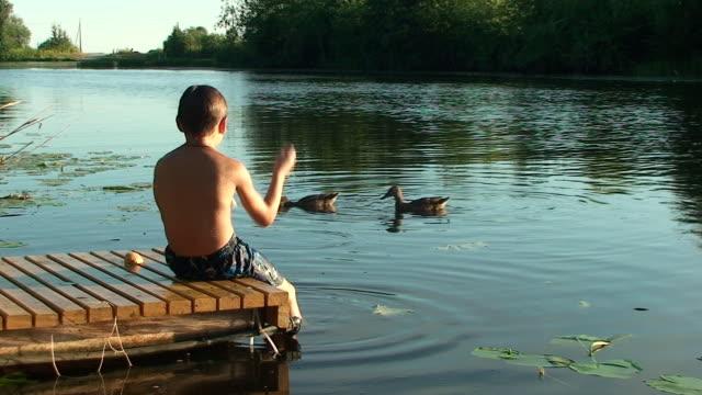 Summer. Boy feeding duck Summer. Boy sitting on the pier and feeding duck. feeding stock videos & royalty-free footage
