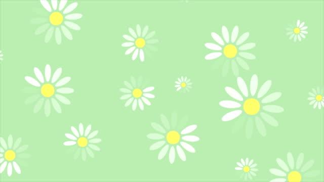 stockvideo's en b-roll-footage met zomer kamille bloemen minimale video animatie - floral line