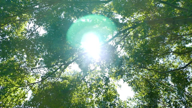 Summer Deciduous Forest video