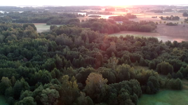 summer end misty morning nature park landscape, aerial - lituania video stock e b–roll