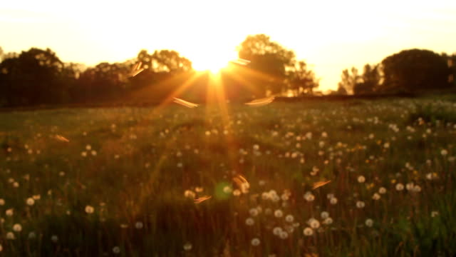 Summer Files A shot of sunset meadow files arthropod stock videos & royalty-free footage
