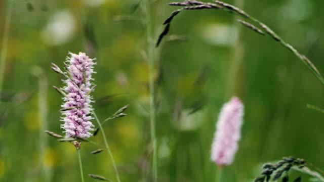 vídeos y material grabado en eventos de stock de campo de flores de verano en un fondo nublado. - flor silvestre