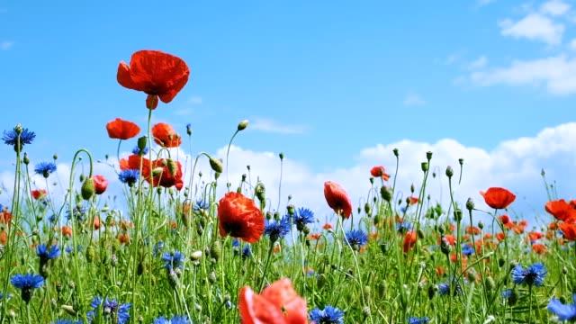 vídeos de stock e filmes b-roll de summer flowers sway in the wind on a sunny summer day - prado