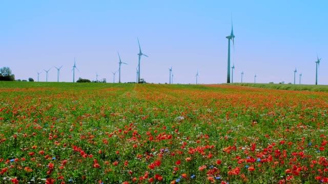 vídeos y material grabado en eventos de stock de las flores de verano se balancean en el viento en un día soleado de verano - generadores