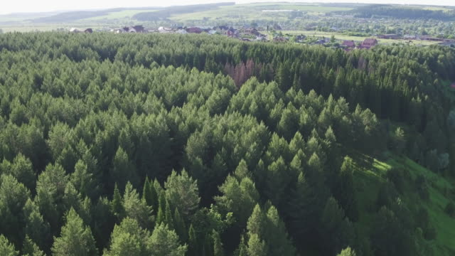 Summer forest aerial top view. Green conifers trees in countryside woodland. Drone above colorful texture in nature. Aerial drone view of big green dense forest in countryside. - video