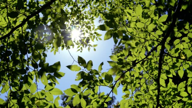 Summer forest from inside with sun peaking through leaves
