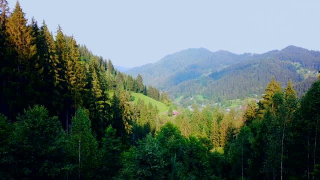 vídeos de stock, filmes e b-roll de floresta de verão nas montanhas cárpatos - ucrânia