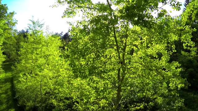 AERIAL: Summer forest video
