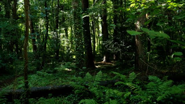 summer forest video