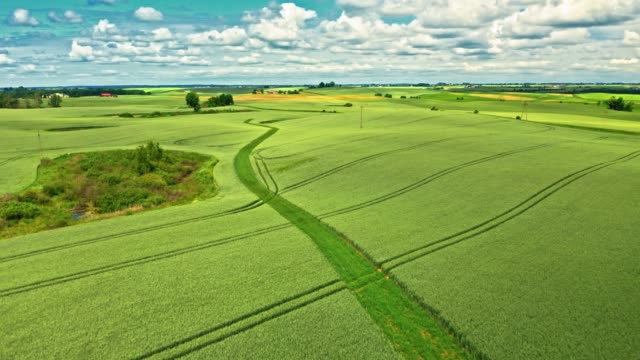 Summer green field in sunny day, aerial view Summer green field in sunny day, aerial view agricultural occupation stock videos & royalty-free footage
