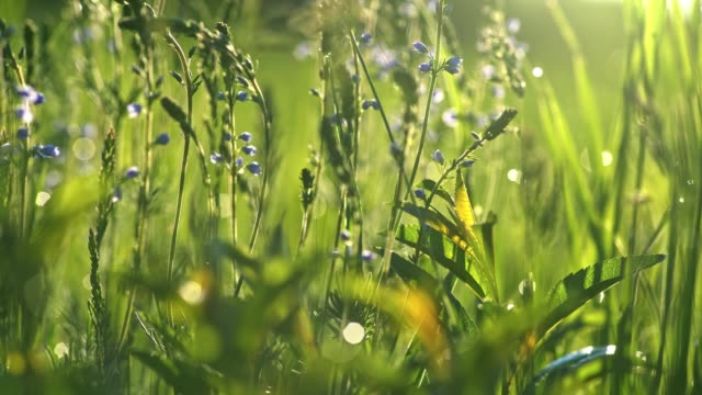 vídeos de stock e filmes b-roll de summer green nature concept. blue wild flowers and green grass. macro ground slider shot, 4k - ambiente vegetal