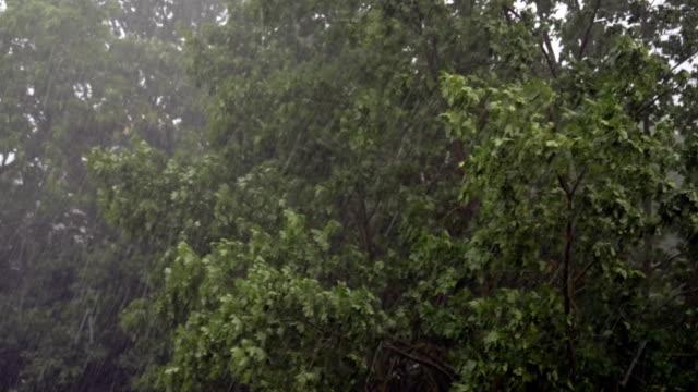 Sommer-Hagelsturm erschüttert große Bäume – Video