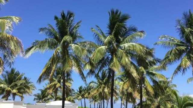 Summer in Miami Beach