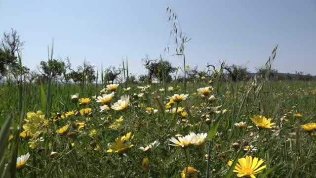 Summer land video