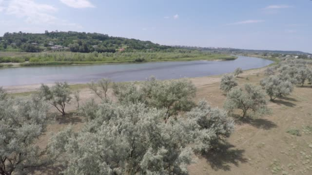summer landscape on the banks of the green river. drone shooting video