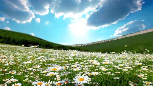 summer landscape video