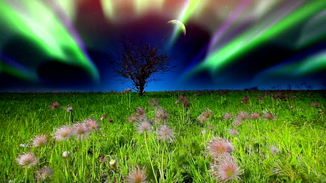 summer landscape sky, tree, lawn, space, astronomy, landscape, night, spring polar climate stock videos & royalty-free footage