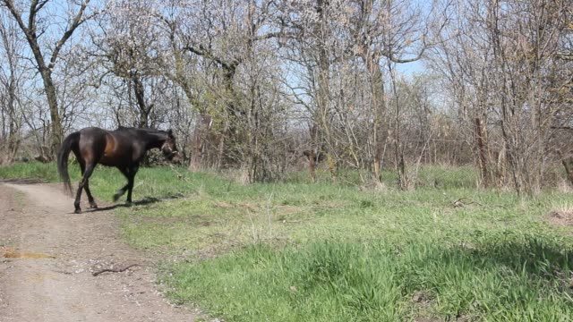 Summer landscape with black horse video