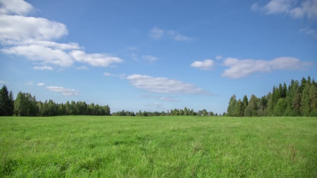 Summer landscape with field of grass,blue sky timelapse.