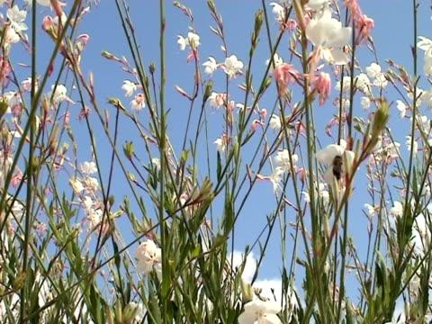 vídeos y material grabado en eventos de stock de summer meadow - insecto himenóptero