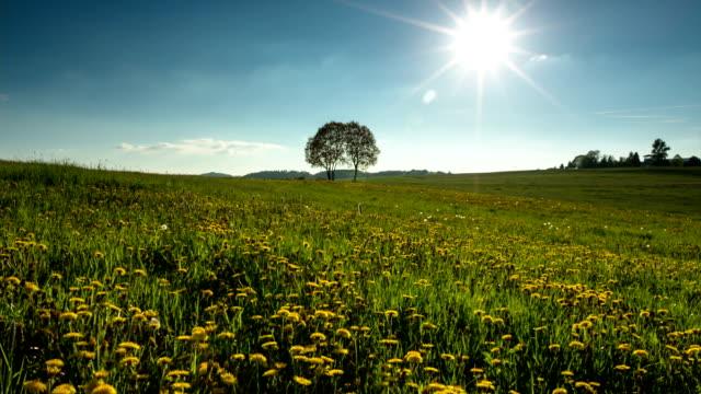 vidéos et rushes de crane vous: prairie d'été - colline